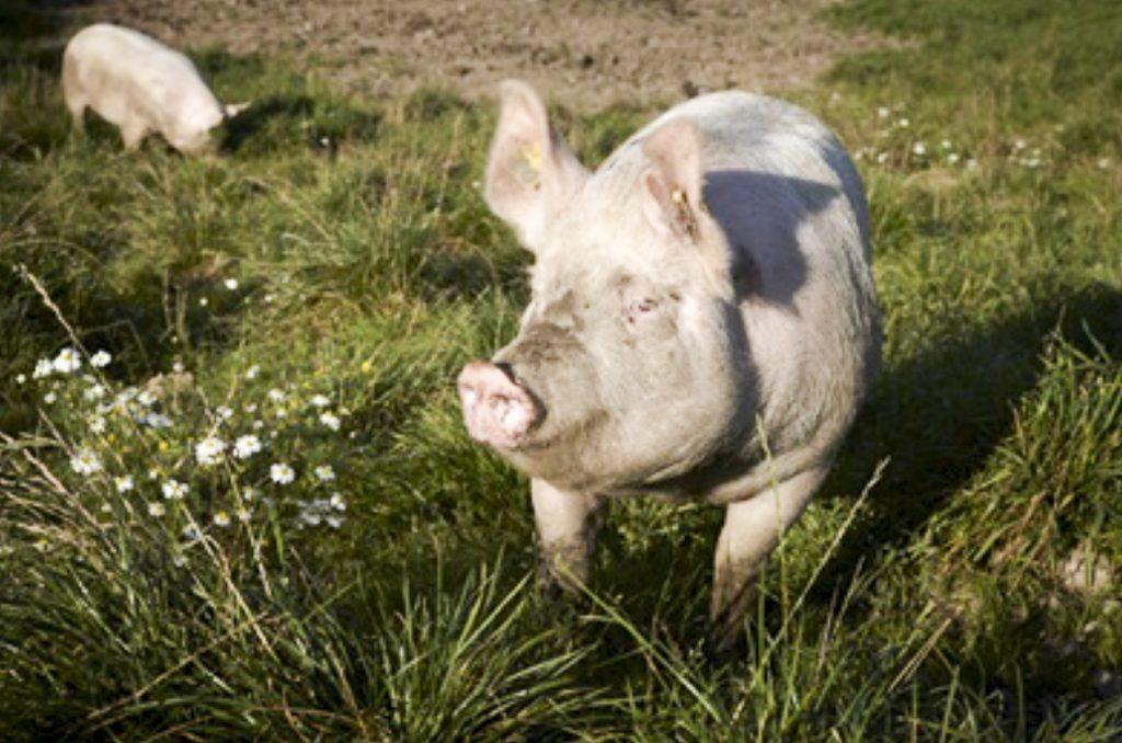 grissebassen i Guldborgsund - privat børnepasning nær guldborg